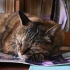 【写真特集】廃校を見回る猫校長