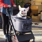 愛犬と楽々安心なお出かけに、犬用カート「エアバギー」 子ども用と同じ安全性