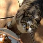 猫の食欲が落ちたら、鼻の状態を疑って