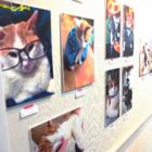 猫写真に猫グッズもたくさん! 猫づくし空間にうっとり やまがた猫びより写真展
