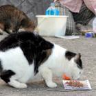 野良猫の不妊・去勢手術を公費で 神戸市議会が条例案