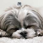 病気予防やストレス軽減のために 犬猫を飼うなら不妊・去勢手術を