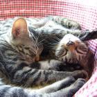 第39回 「こねこ塾」で伝えたいこと② 猫は本来ハンター、かみつかれても「応戦」しないで