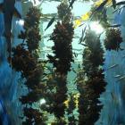 第24回 三陸の海を再現した巨大な水槽 地域との絆も感じた「仙台うみの杜水族館」