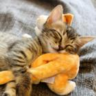 保護猫のクルミ、家族みんなのかわいい妹よ。網戸にもすいすいと上手に登るの!