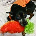 第62回 犬の先輩、森泉ちゃんのこと 「ベテランママ」の助言やセレクトに感激!