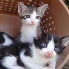 第40回 不幸な子猫を減らすため、ノラ猫にも不妊去勢手術をしてあげて