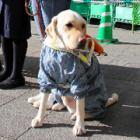 盲導犬の育成「協力を」 福岡で街頭募金、20年目 女子高生らも呼びかけ