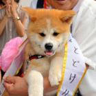 日ロ交渉、難しいワン! プーチン大統領に犬を贈りたいけど……「世界秋田犬フォーラム」で官房長官