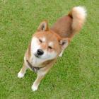 第26回 続・私が東京で犬を飼うなら…… 動物と飼い主の「マッチング」を考えよう