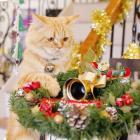 クリスマス、大掃除、お正月… 猫飼いの年末年始トホホあるある