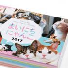 365日いろんな猫に出会える 日めくりカレンダー「まいにちにゃんこ」