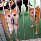 犬や猫は家族と同じ! 殺処分ゼロめざす条例案を可決 茨城県議会