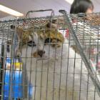 野良猫70匹の去勢手術、 香川の志々島で始まる ワクチン接種も