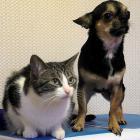 犬猫の死因1位はがん 想像以上に進行が速いことも