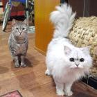 看板猫4匹が待つ夜カフェ 人見知りは一切なし