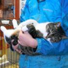 北海道の「猫島」で保護活動 人に慣らして新たな飼い主へ… 旭山動物園、生態系を守る取り組み