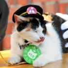 三毛猫の「よんたま」登場、駅長めざします! まず「見習い」から 和歌山電鉄ニタマの部下