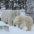 第28回 雪降るシーズン、寒い地域の動物園ならではの工夫