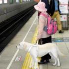 事故防止へ、心のバリアフリー 盲導犬フェリシアと全盲女性に同行してみました