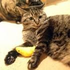 猫が残したものを見つけ、愛おしさに身もだえ 猫飼いのさが
