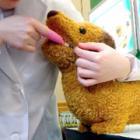 「ペットは大切な家族」 健康志向で市場も広がる 犬猫用の歯ブラシやシャンプー、介護食も!