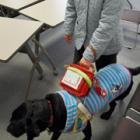 「盲導犬のこと、もっと知って」 ふれあう時の注意点や暮らしぶり、イベントで紹介