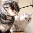 猫大好き主婦が、動画を投稿したら・・・世界が広がった!?「ぴよぴよさん」に聞く