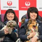 愛犬と一緒に空の旅! JAL、成田から鹿児島へチャーター便