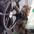 ゴツい海の男たちを骨抜きにする猫船長 「カンパチ」