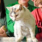 学校猫「たま」いつまでも 忘れないよ 18年愛されて、校庭に墓標