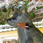 愛犬連れに人気の旅スポット 豪族を救った2匹の忠犬伝説が残る法楽寺