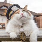 ローカル線を復活させた伝説の先輩から引き継ぐ 猫駅長「ニタマ」