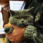 公募ねこ館長にブリティッシュショートヘアの「むぎ」就任!「猫ノ図書館」オープン