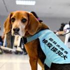 こっそり持ち込ませないワン! 肉・果物や麻薬……「探知犬」が空港で大活躍