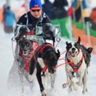 雪煙上げて、犬ぞり駆ける 稚内で「犬たちの甲子園」を開催