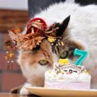 ニタマ駅長、7歳おめでとう!「こにゃん市長」ジュリアーノ君もお祝いにきたニャ~