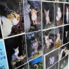 猫の飼育放棄なくしたい……人とネコの共生を考える「ねこフェスタ」、保護団体が開く