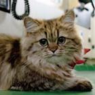 ツイッターで話題沸騰、船乗り猫「カンパチ船長」初の写真集 入浴シーンも公開