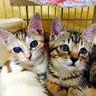 「命の重み、忘れないで…」 淡路島で保護犬・猫の写真展 飼い主も募集