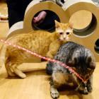 保護猫の明日、考える宿 シェルター付きの「ねこ蔵ホステル」がオープンします!