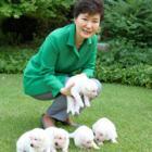 犬9匹、残されて……引き取り先を探す? 朴槿恵氏の飼い犬、大統領府に