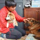 老犬・老猫ホーム、命と向き合い みとりまでお世話します
