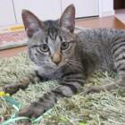 番外編(上)殺処分寸前で助かった保護猫タビオ 家に来たその日から真菌とのバトルが…!