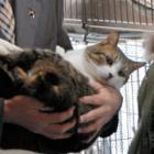 「動物愛護と殺処分ゼロに力を入れます!」 動物管理センターの名称変更へ 熊本県知事が表明