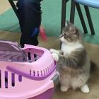 第47回「こねこ塾」で伝えたいこと⑧ 刺激のない環境で育った猫は、外出や環境変化で大きなストレスが!