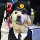 ラブラドルレトリバーの「きな子」、天国へ 警察犬試験6回失敗、映画にも