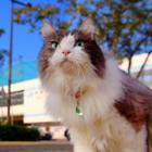 猫の「毛ケたん」が見つけたのは… 子育てしやすいコンパクトタウン! PR動画みてニャ~