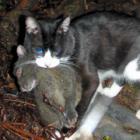 「ノネコ」増やしたくないニャン! 飼い猫にチップ、屋外なら手術も義務化 奄美大島の5市町村