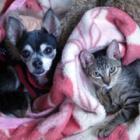 僕は元野良猫ドンパ。迷子になって泣いていたらチワワのシェリ姉ちゃんが助けてくれたの!